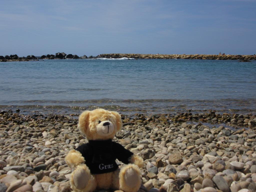Graz The Teddy Bear