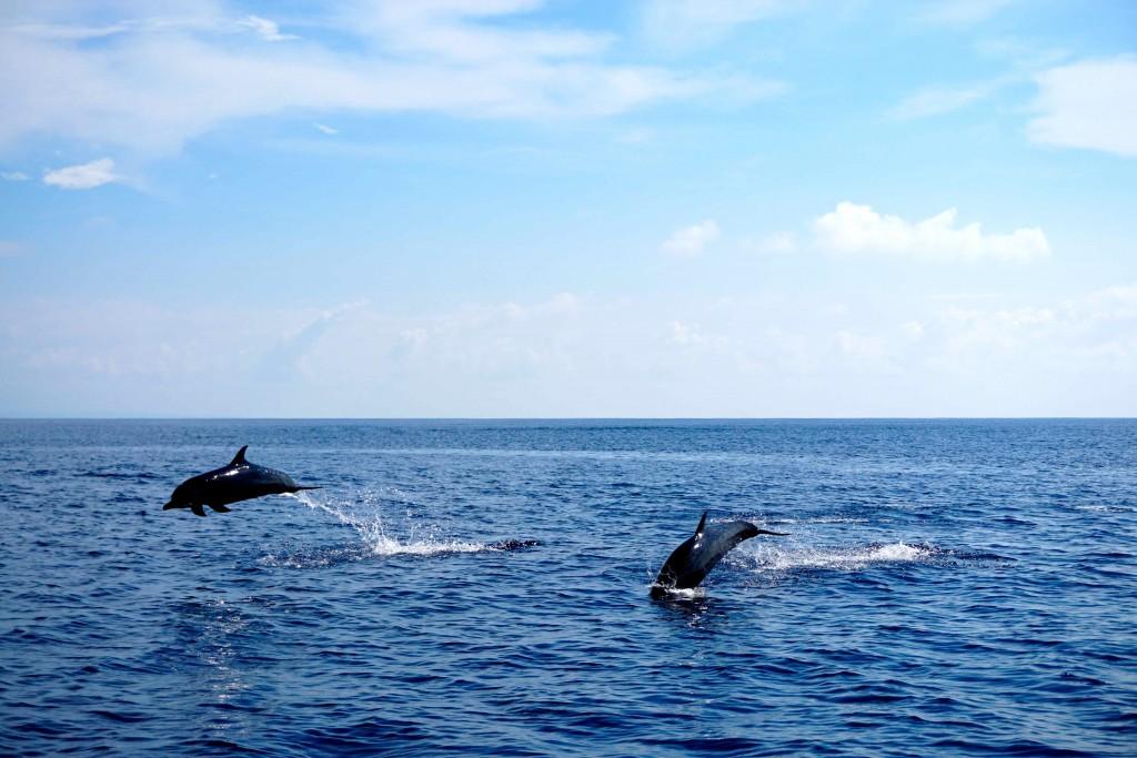 Caños Dolphins